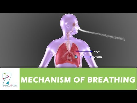 MECHANISM OF BREATHING PART 01