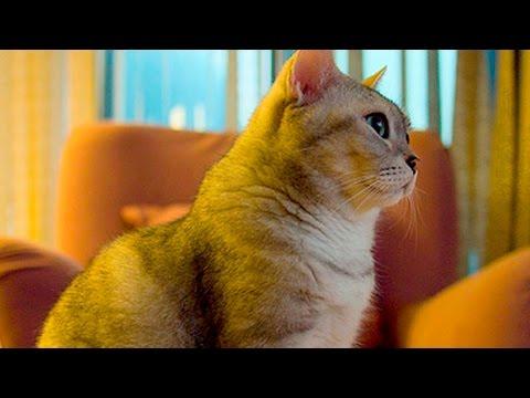 Cats Watching TV #18