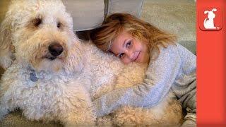 Labradoodle Service Dog Changes Little Girl's Life