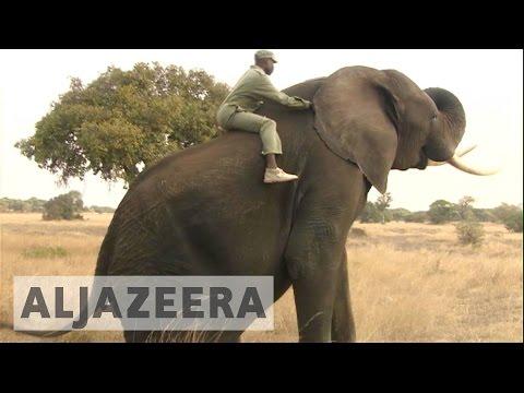 Zimbabwe's cash-strapped government selling elephants