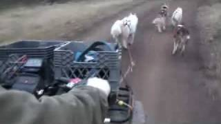 Dryland Sled Dog Cart & ATV Training
