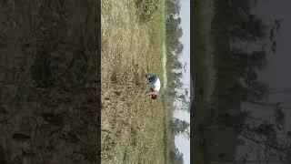 Removing weeds from field