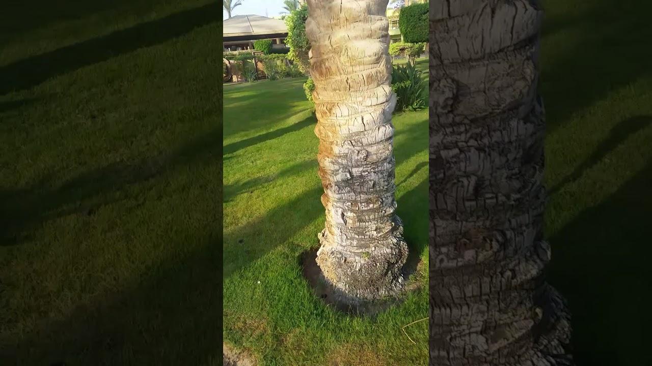 Отель Palm Beach Resort Egypt 2017 - YouTube