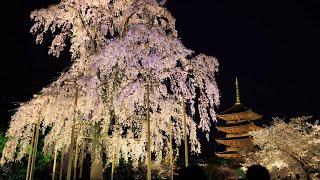 【Beautiful Kyoto】 京都の四季・風景写真 [2004-2016] (4Kphoto)
