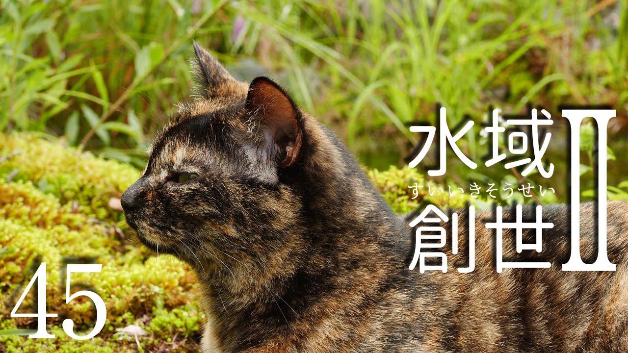 サビネコのコント 水域創世Ⅱ- 45【4K】