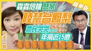 【中天辣晚報精華版】20210226 突如其來的禁令...台灣鳳梨外銷陸陷危機