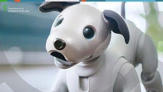 Новый робот собака Sony Aibo (Robotics.ua)