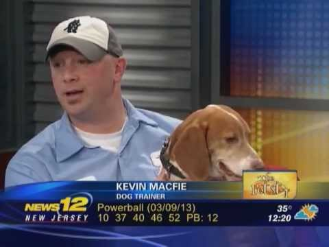 roscoe the bed bug dog & bell environmental on news 12 - nj on