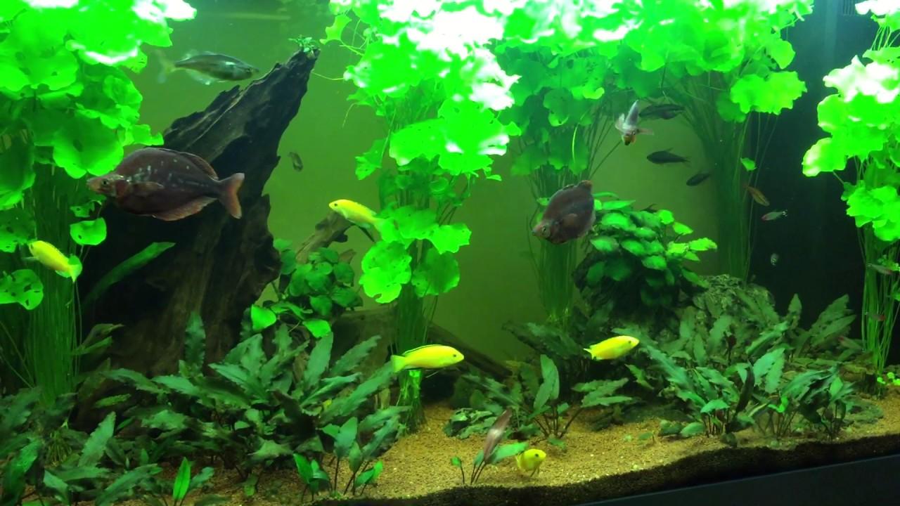 My 350 liter aquarium youtube for Aquarium 350 litres