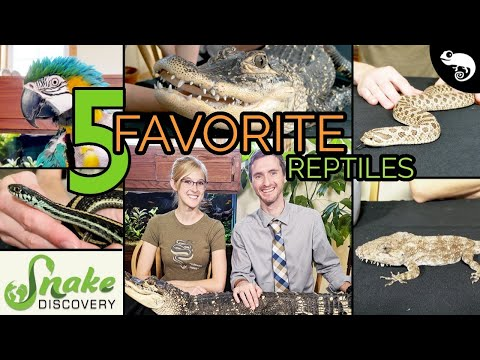 Top 5 Pet Reptiles - Snake Discovery