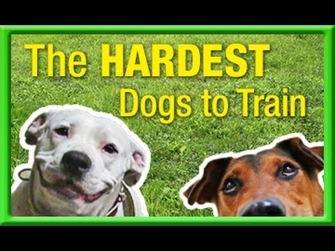 hardest dogs to train
