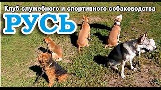 Дрессировка собак обучающее видео.
