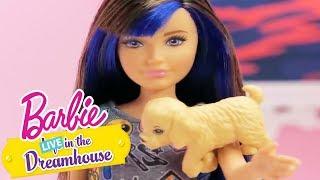 Barbie Italia   Un mare di cuccioli   Barbie LIVE! In The Dreamhouse