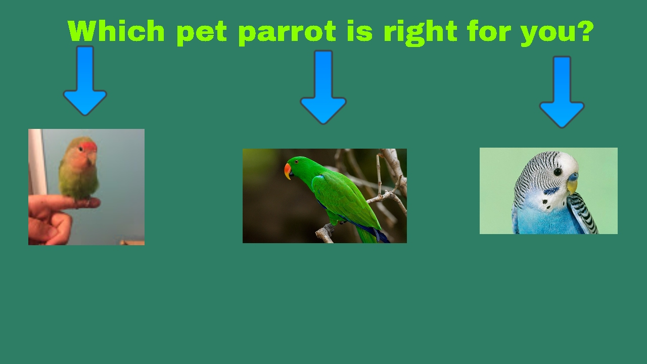 How to choose a parrot