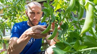 This SIMPLE Garden Trick Will GUARANTEE You More Peas!