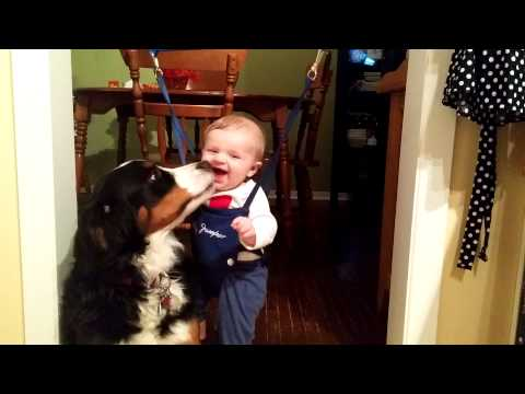 Bernese Mountain Dog and Baby Love  - Feb 24 , 2015
