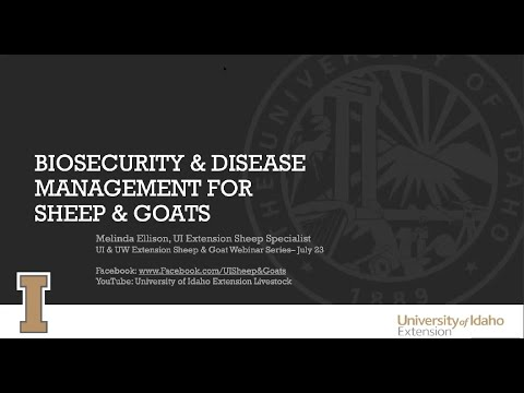 Biosecurity & Disease Management For Sheep & Goats