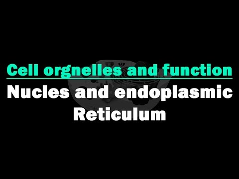 Cell Organelles and Functions | Nucleus & Endoplasmic Reticulum | Biology | Science | LetsTute