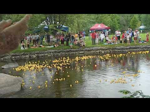 Stewart Park Festival 2017: The YAK Duck Race
