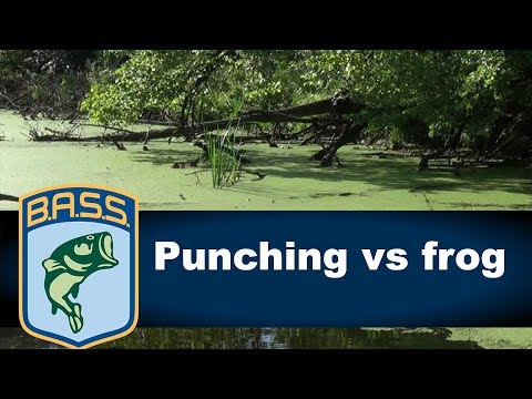Choosing between a frog and punch bait