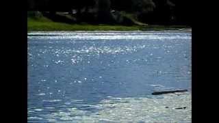 видео река десна брянск