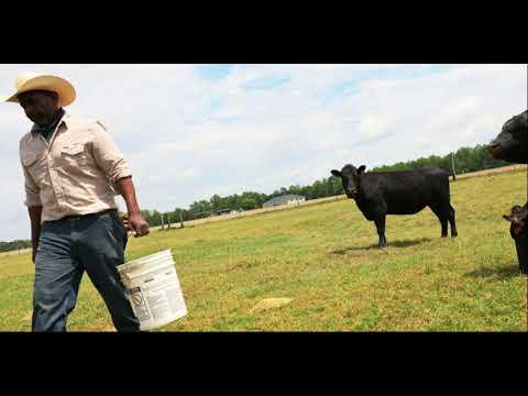 Black Farmer Loan Forgiveness Placed On Pause