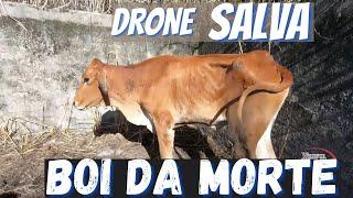 DRONE resgata BOI no BURACO wanzam fpv