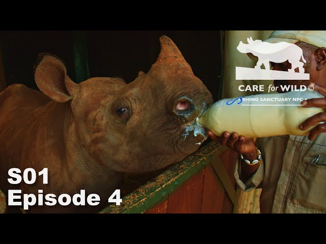 Covid 19 Lockdown at Care for Wild Rhino Sanctuary | S01 Episode 4
