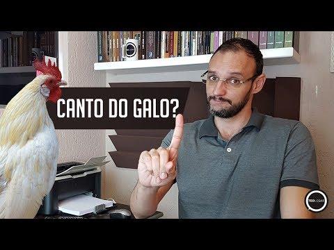 Teologar#50 - Canto Do Galo?