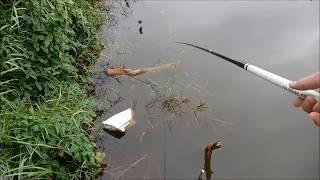 Câu cá rô đồng trúng lớn, không kịp móc mồi - Phần 4 thumbnail