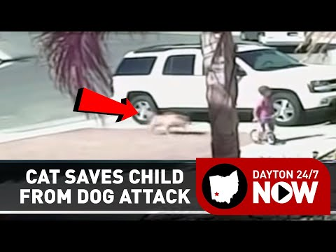 Family Cat Fights Off Dog Attacking Child
