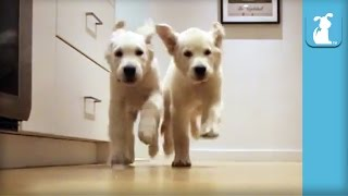 Adorable Puppies Running For Dinner Time-lapse - Puppy Love
