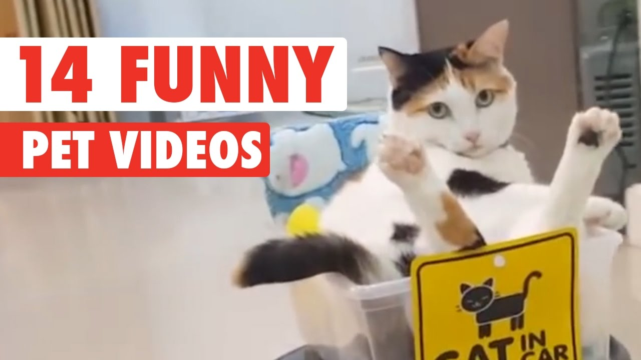 14 Funny Pets Video Compilation 2016