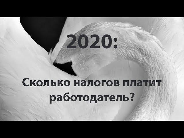 Сколько налогов платит работодатель в 2020 #БелыеНалоги2020