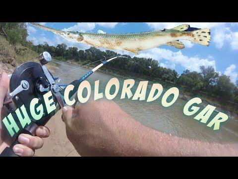 HUGE Texas Colorado Longnose Gar!!