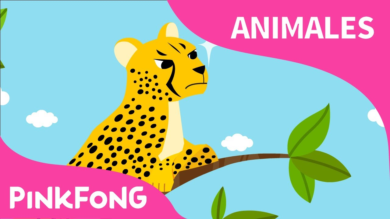 Rápido Guepardo   Guepardo   Animales   PINKFONG Canciones Infantiles