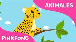 Rápido Guepardo | Guepardo | Animales | PINKFONG Canciones Infantiles