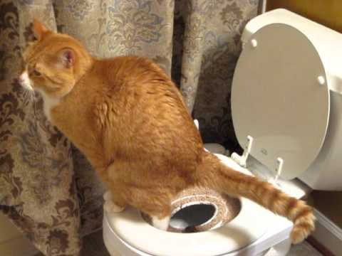 how to make cats poop smell less
