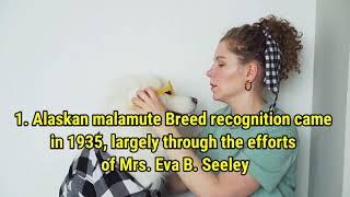 Alaskan Malamute Dog Breed Information!!