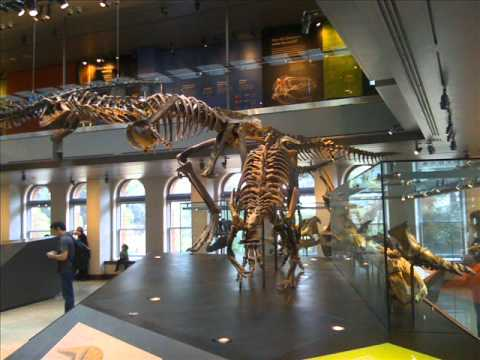 A Trip To The Natural History Museum - Part 1