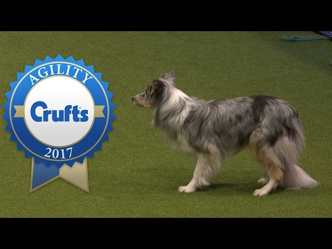 Agility - Large International Invitation Jumping Competition (Part 1) | Crufts 2017