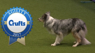Agility  Large International Invitation Jumping Competition (Part 1) | Crufts 2017