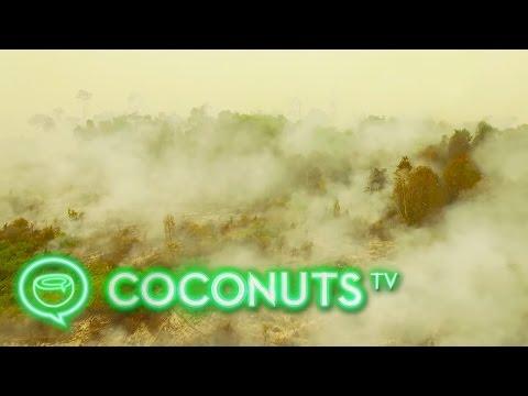 Drone video: Deforestation fire & haze in Borneo, Indonesia