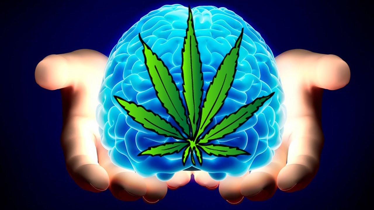 La Marihuana previene Lesiones Cerebrales.