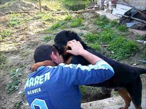 rottweiler 8 mesi :)