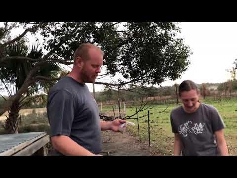 Cheap Organic Livestock Feed? (experiment)