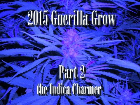 V Guerrilla Economist Youtube 2015 2015 Guerilla G...