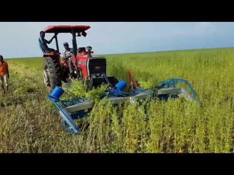 YAPEL ÇDG - 300 Makinemiz ile Susam Hasadı Video 2 - SUDAN 20.10.2016
