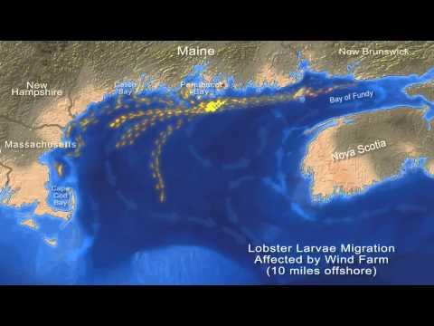 Statoil offshore vindkraft planen vil skade amerikanske hummer industri