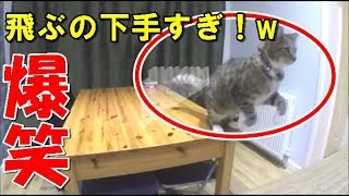 ユルい動画。猫ってジャンプ得意なはずなのに、この猫は超下手!!!で...
